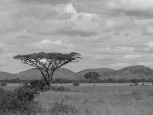 The Serengeti landscape.