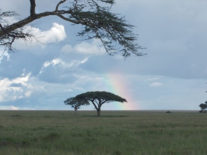 Rainbow over the Serengeti.